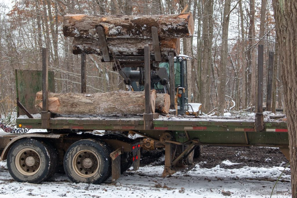 A truck loads recently harvested logs from a forest. Part of the Timber Harvesting process also removes overmatured trees from land to ensure future growth.