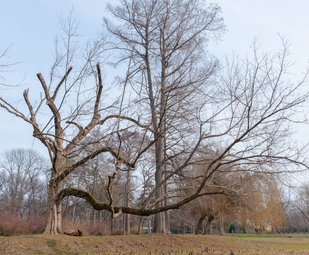 Stunted trees have mangled root systems and limbs closer to the forest floor than higher-grade trees.